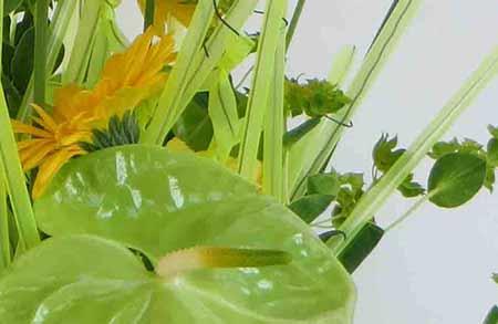 bloemschikken cursus Gistel Ardooie Westrozebeke Sijsele