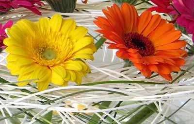 bloemschikken oostende gistel ardooie roeselare brugge sijsele maldegem